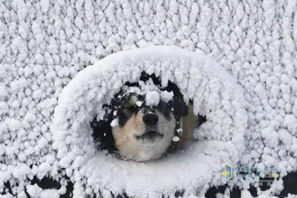 """天寒地冻出门冻成""""狗"""""""