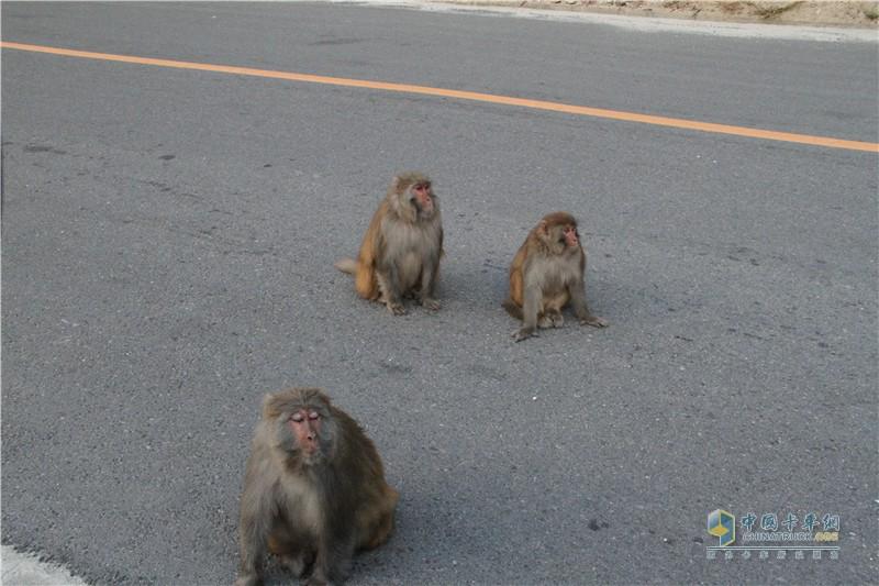 猴子满是青睐的看着我们
