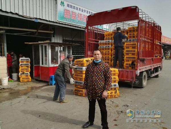 易东晓每天用福田奥铃车去养殖基地拉土鸡到成都批发市场