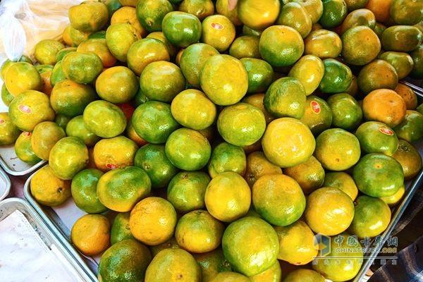 福田祥菱杨姐一年四季卖各类水果,有蜜桔,枣子,葡萄,哈密瓜,苹果等等