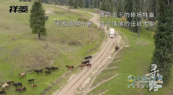 金秋时节,新疆哈萨克族牧民开始大面积转场