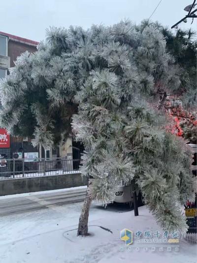 受降雪及路面结冰影响道路通行