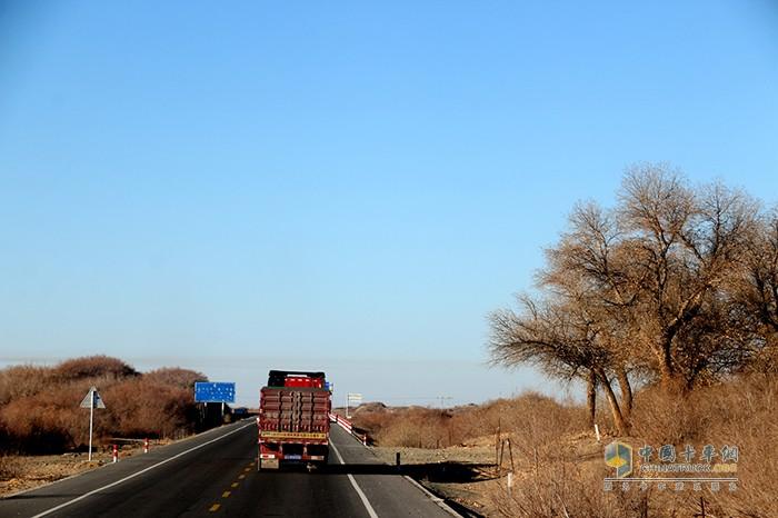 车队在沙漠里经过胡杨林